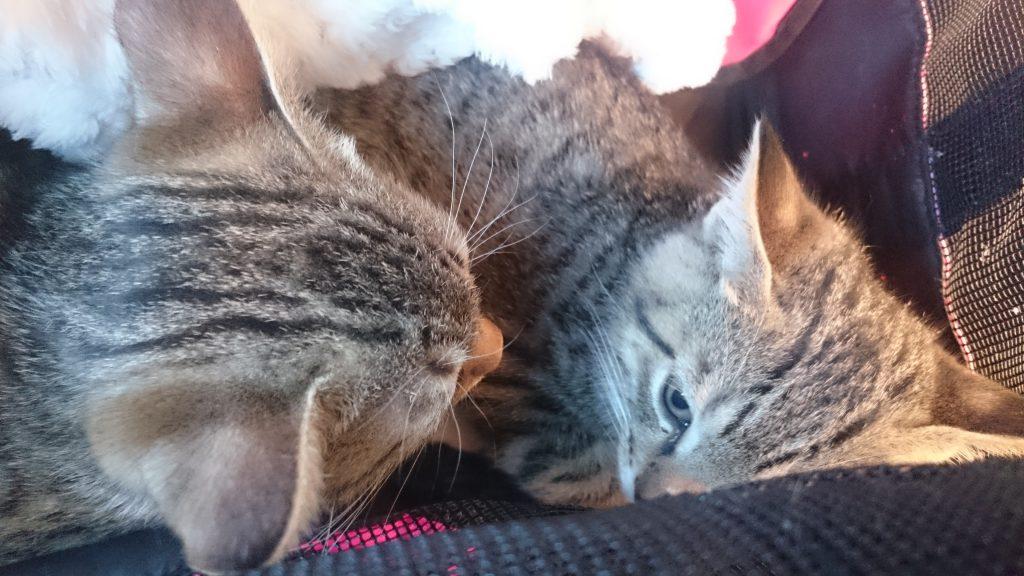 子猫,里親,こねこ,新幹線,
