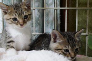 子猫,保護猫,里親,ねこ,