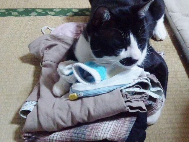 周南,ねこ,日記,ものに入る,猫,ビニール,桶