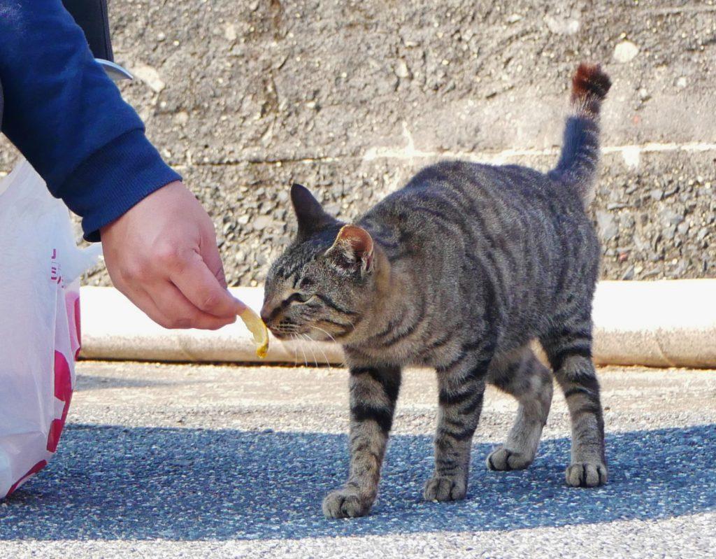 猫,ネコ,大津島,周南