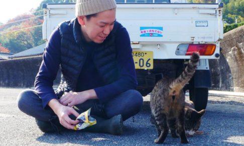 猫,ネコ,大津島,周南,徳山