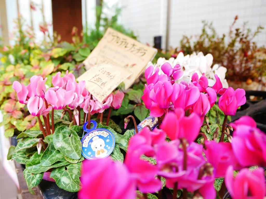 花屋,フラワーショップ,市庭フラワー