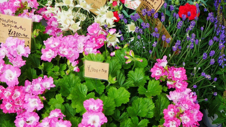 母の日は「お母さんありがとう」の気持ちをこめたプレゼントを!徳山商店街のおすすめをご紹介!