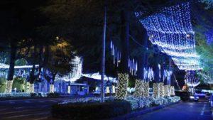 ファンタジックナイト @ 御幸通り、青空公園、若葉公園