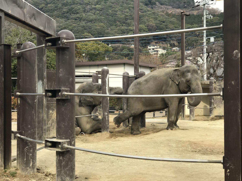徳山動物園ゾウ