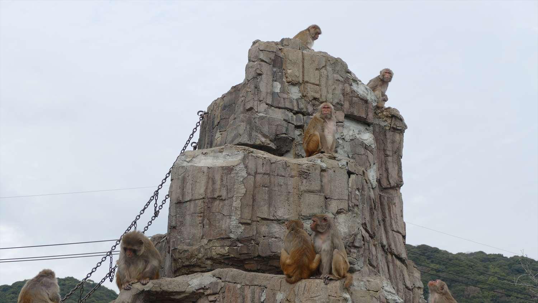 徳山動物園のサル