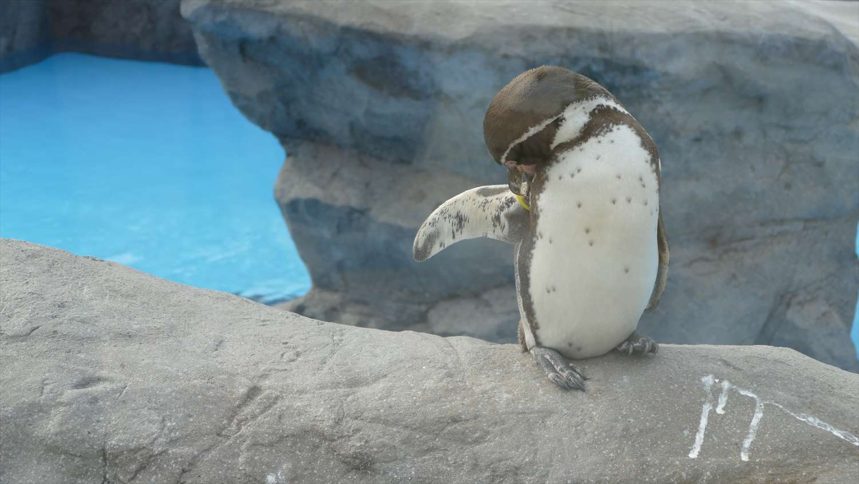 徳山動物園ペンギン