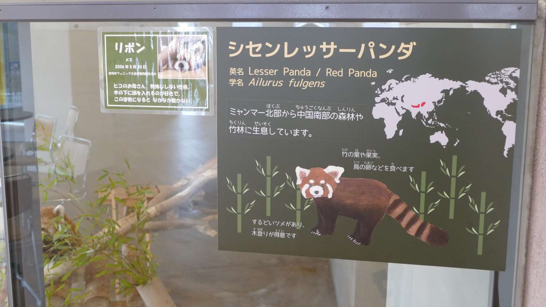 徳山動物園レッサーパンダ