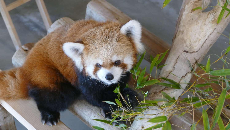 徳山動物園のリニューアル知ってる?飼育&広報担当の重永さんに聞いたお薦めの過ごし方