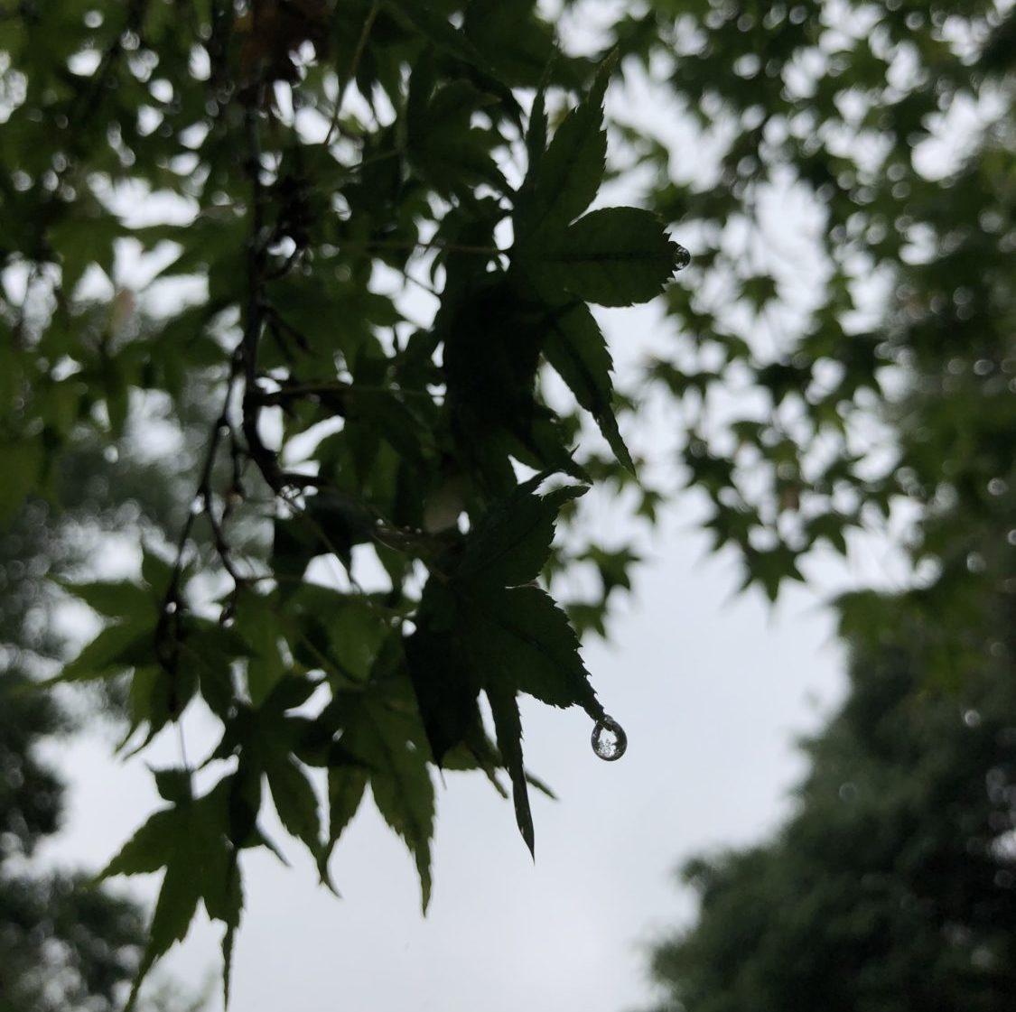 周南西緑地公園 紅葉