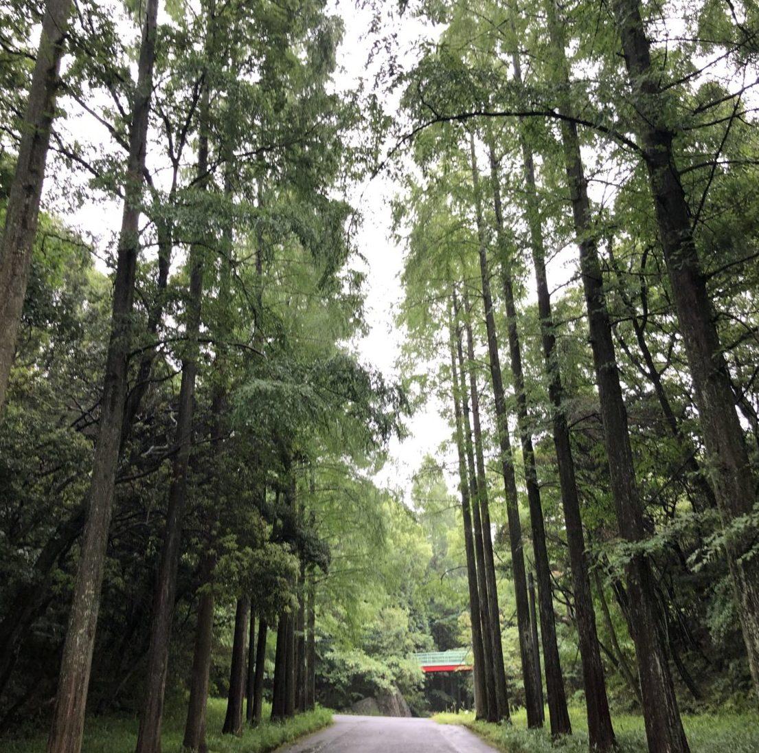 周南西緑地公園一本道