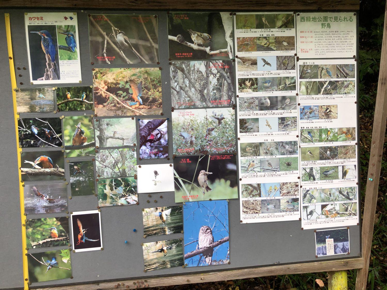 周南西緑地公園 野鳥看板